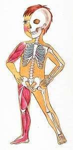 Скелет тела человека