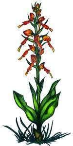 Редкие растения Кавказа