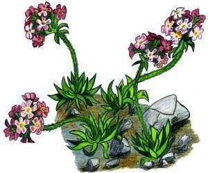 Редкие растения степной зоны