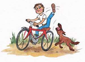 Что делать, если на твоем пути чужая собака