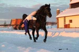 Конный спорт-для тех кто любит лошадей