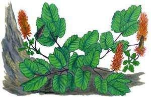 Редкие растения Дальнего Востока