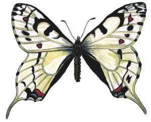 Красная книга. Бабочки