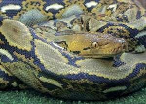 Факты о змеях