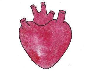 Группы мышц человека