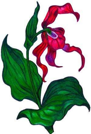 Лесная орхидея