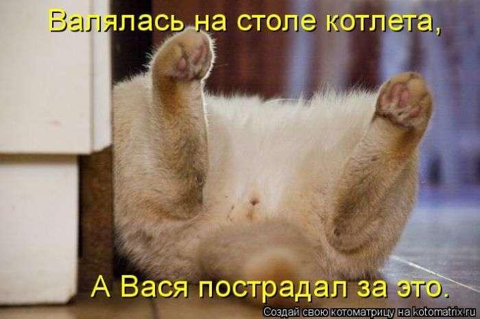 Кращі котоматриці тижні (48 фото)