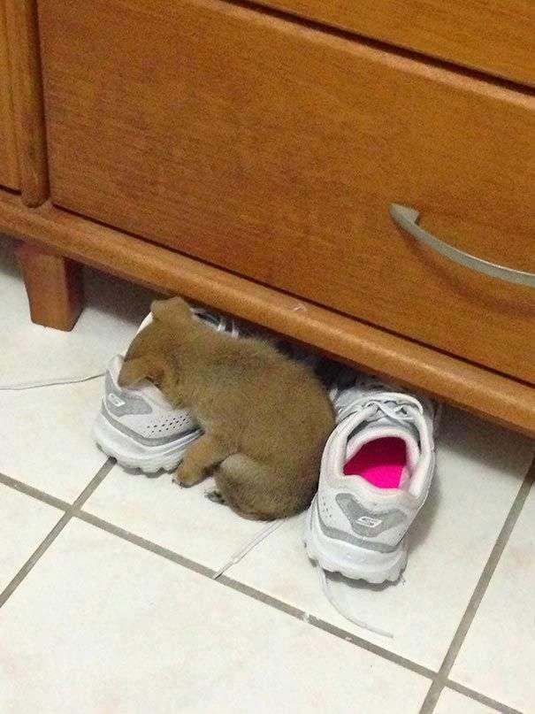 20 цуценят, які можуть спати де завгодно (20 фото)