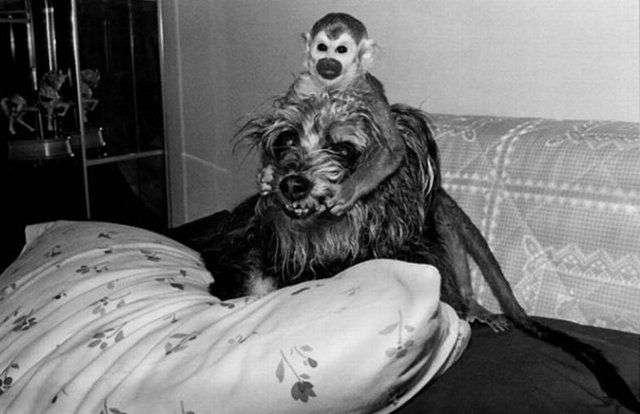 Смішні мавпи (16 фото)