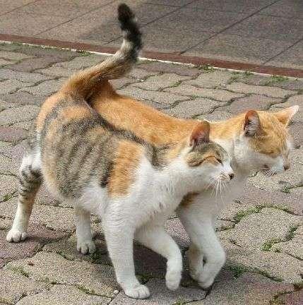 Смішні коти (38 фото)