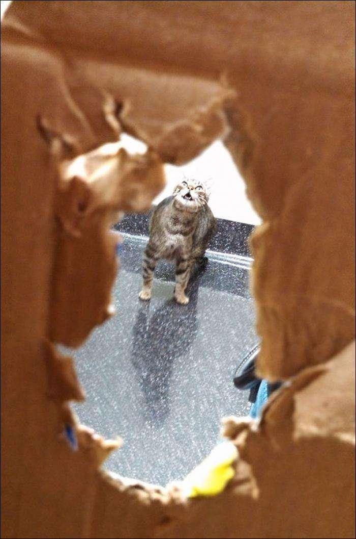 Коти, які зрозуміли, що їх привезли до ВЕТЕРИНАРА! (14 фото)