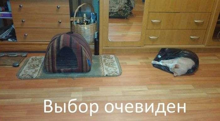 Підбірка прикольних фото №1209 (90 фото)